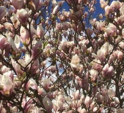 TEMA VÅR: Nu är våren kommen, eller?