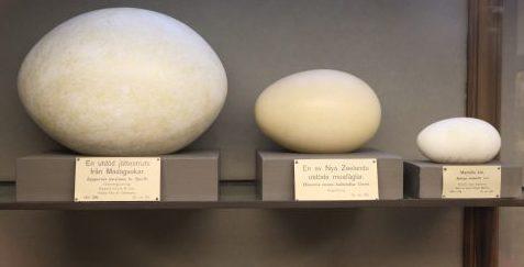 Lite bilder från Naturhistoriska museet